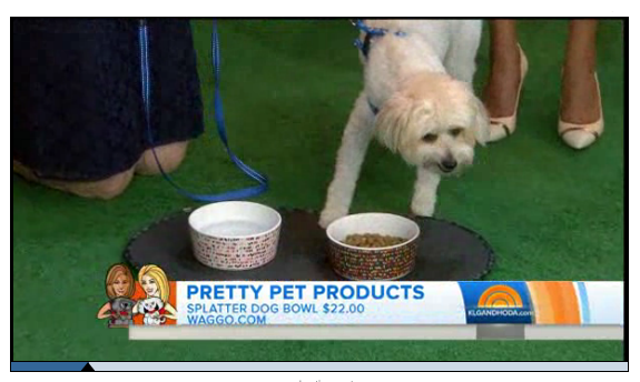 Today Show June 2014 Best Ceramic Pet Bowls