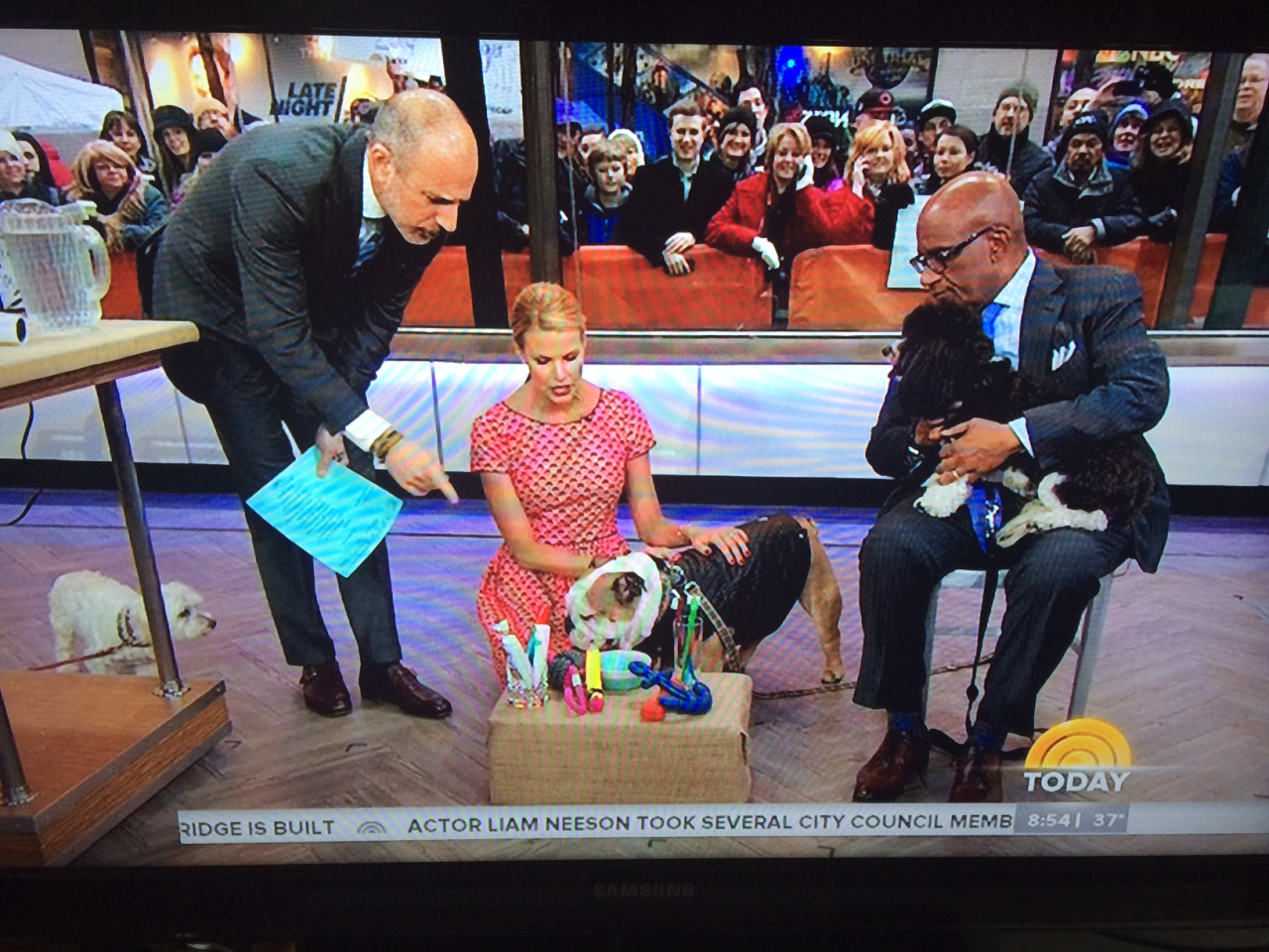 Today Show March 2014 Waggo Colorful Dog Chew Toys