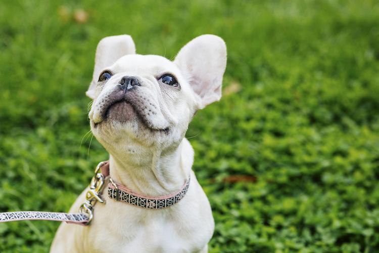 Mrs.Sizzle-StylePup-Waggo-Dog-Collar-Leash